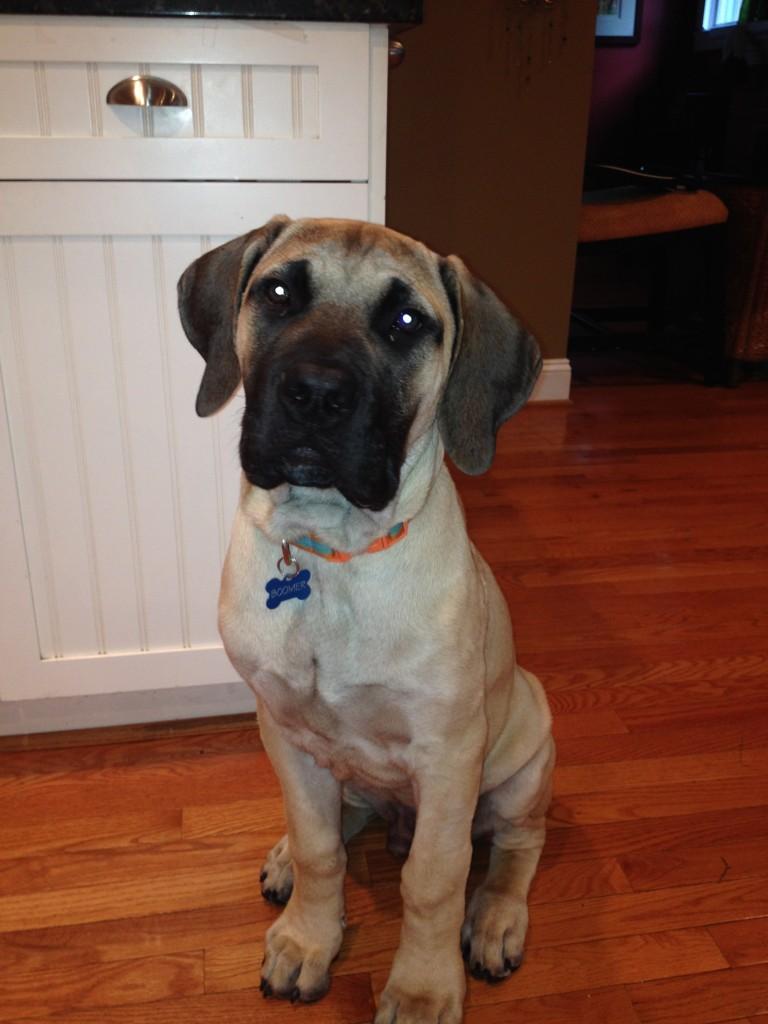 Cathi's dog boomer
